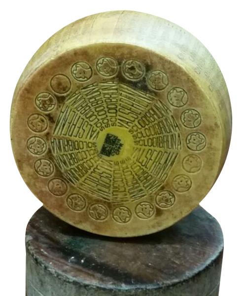 Parmigiano Reggiano di Solo Bruna Forma intera