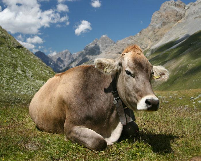 Parmigiano Reggiano DOP di Vacche Brune